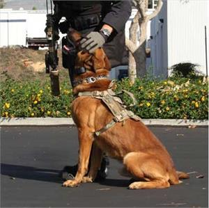 Advance Dynamic EDO K9 Tactical Dog Harness Molle